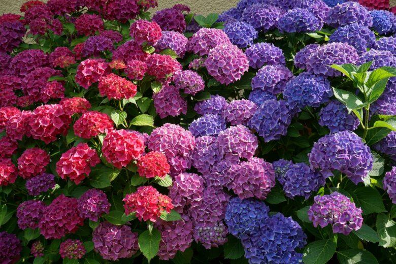 flowers-2062232_1920