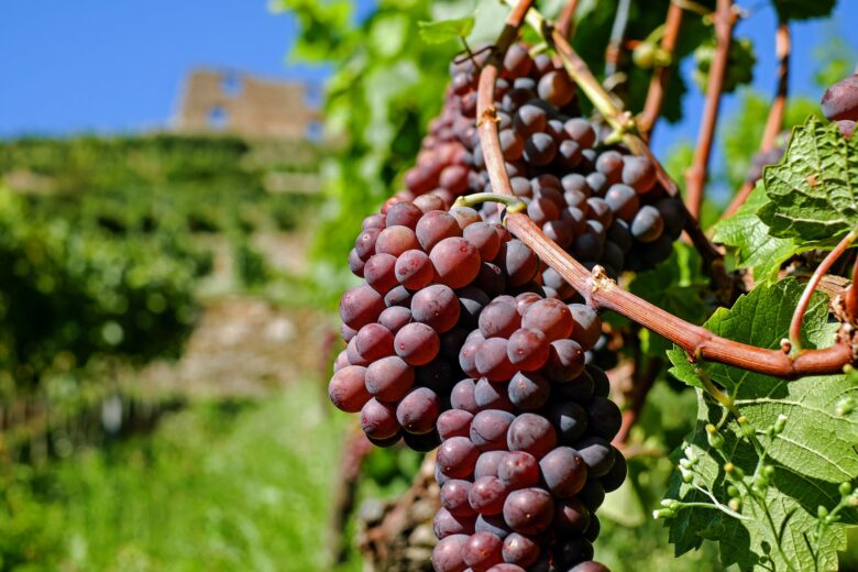 grapes-2672886_1920